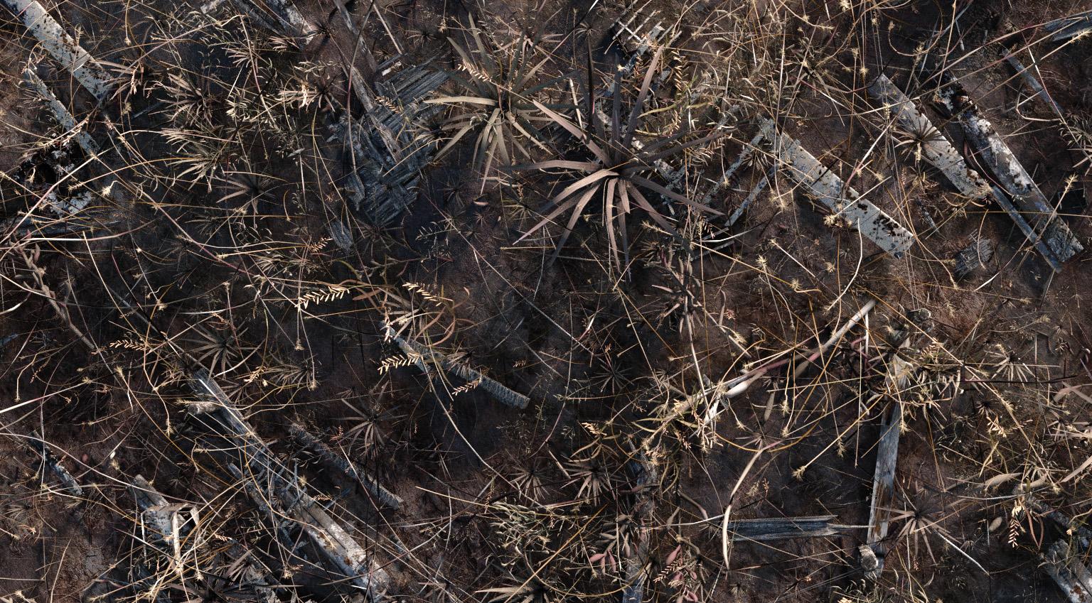 grass particles blender