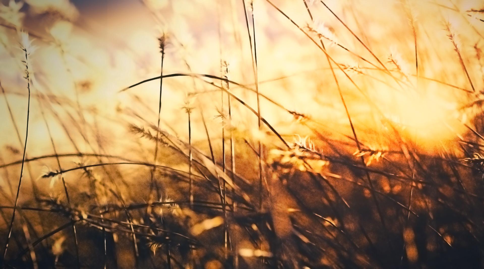 translucent grass material