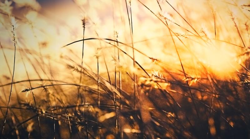grass translucent